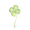 Clover - Plants -