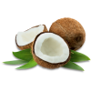 Coconut - Food -