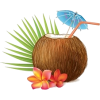 Coconut - Uncategorized -