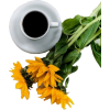 Coffe and flowers - Напитки -
