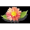 Coral flower - Plantas -