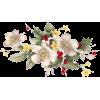 Flowers White Plants - Biljke -