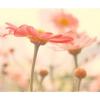 Cvijeće - Biljke -
