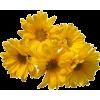 DAISY FLOWER - Biljke -