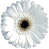 DAISY WHITE - Predmeti -