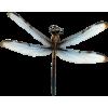 DRAGON FLY - Cinturones -