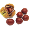 Chestnut - Plants -