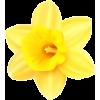 Daffodil - Predmeti -