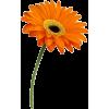 Daisy - Przedmioty -