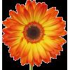 Daisy - Predmeti -