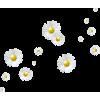 Daisy - Uncategorized -