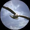 Bird - Animali -