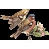 Birds - Animali -