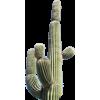 Cactus - Rośliny -