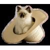 Cat in the hat - Animali -