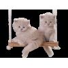 Cats - Animales -