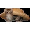 Cats - Animals -