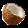 Coconut - Frutas -