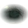 Dark forest - Nature -