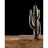 Desert - Nature -
