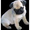 Dog - Animales -