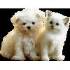 Dog & Cat - Animali -