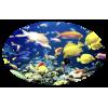 Fishes - Animals -