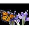 Flowers/Butterfly - Rośliny -