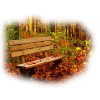Forest/Bench - Nature -