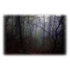 Forest - Nature -