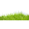 Grass Psd - Nature -