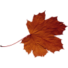Leave - Plants -
