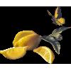 Lemon - Frutas -