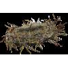Nest - 自然 -