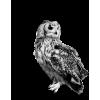 Owl - 動物 -