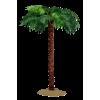Palm Tree Green - Biljke -