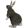 Rabbit - Animals -