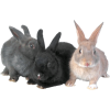 Rabbits - Animals -