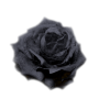 Rose - Растения -