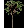 Tree Green - Biljke -