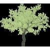 Tree Green - Plants -