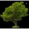 Tree Green - Rastline -