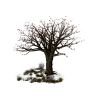 Tree Brown - Plants -