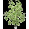 bilje - Pflanzen -