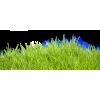 Grass - Nature -
