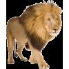lav - Animals -