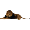 lav - Animali -