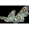 leptiri - Animals -