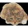 mačka - Animals -