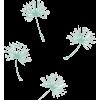 maslačak - Plants -
